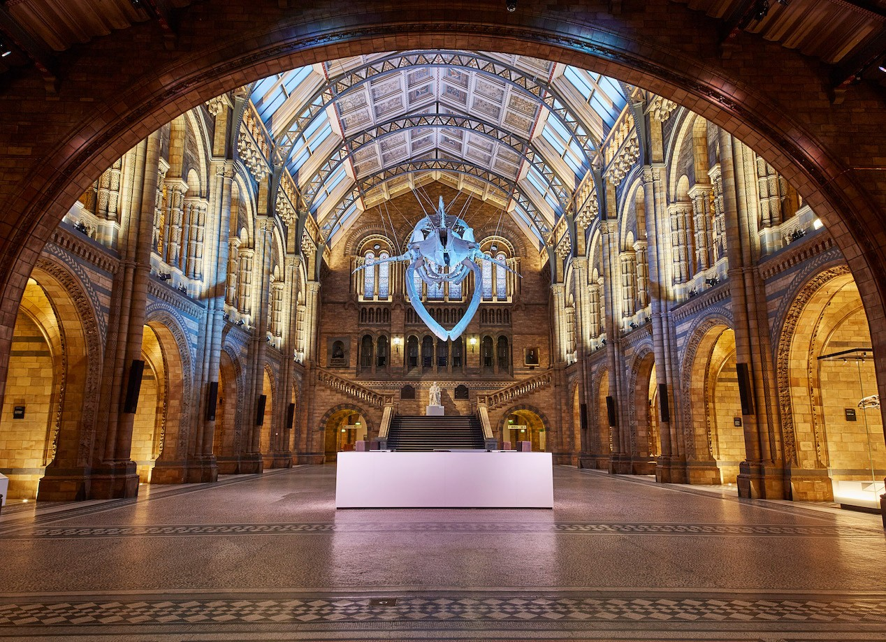 Ecologies of the Natural History Museum and Contemporary Art